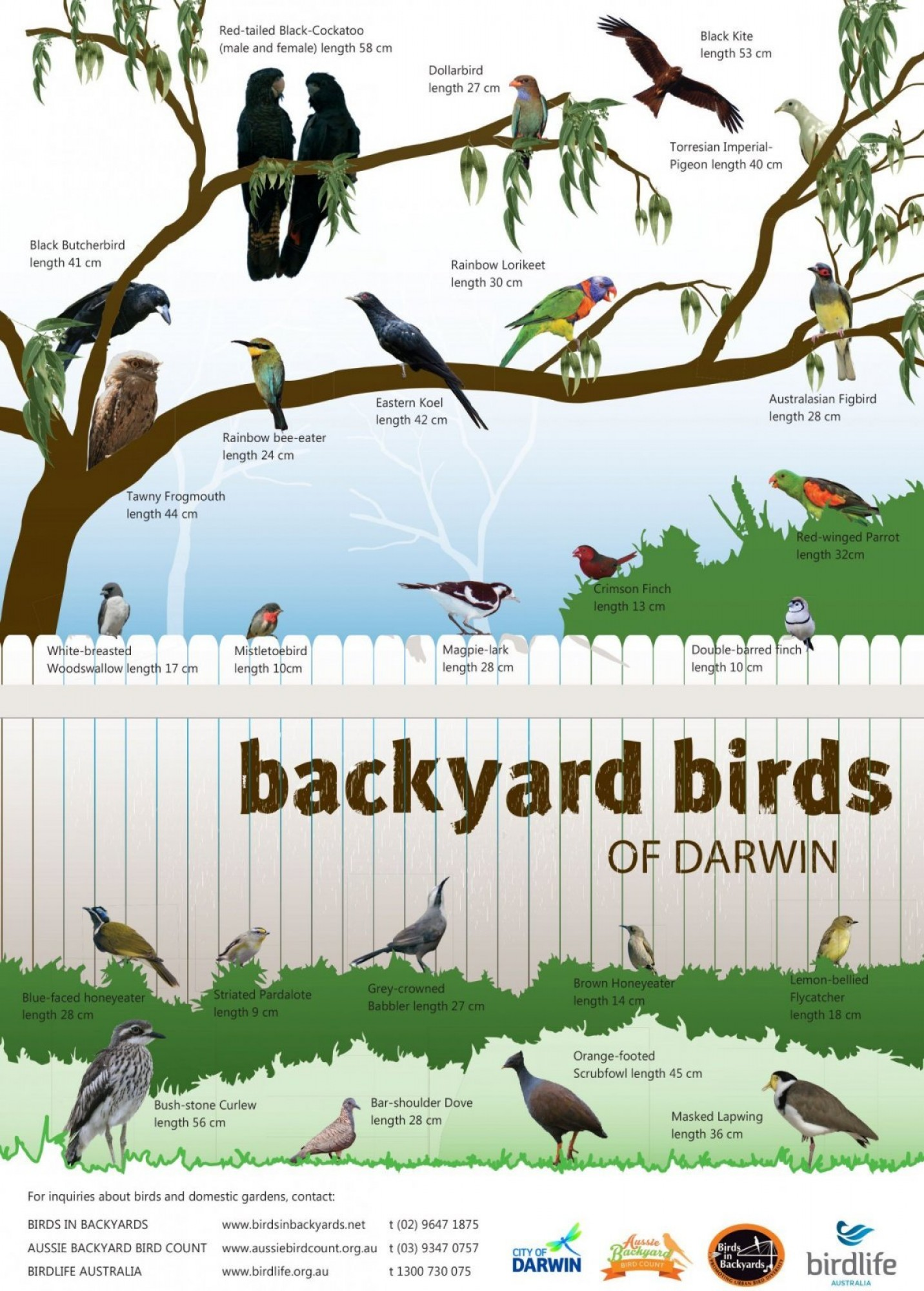 Birds in Backyard Poster