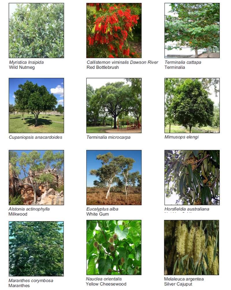 anula greenbelt plants